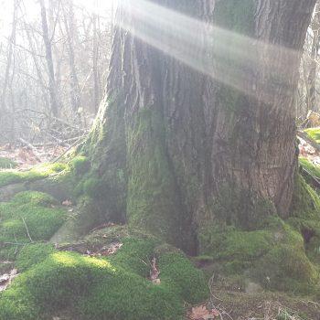 licht boom